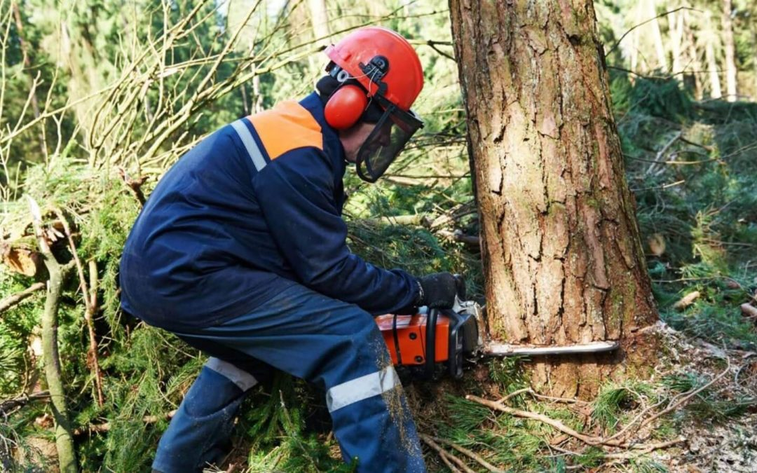 Пильщик на лесозаготовку в Латвию